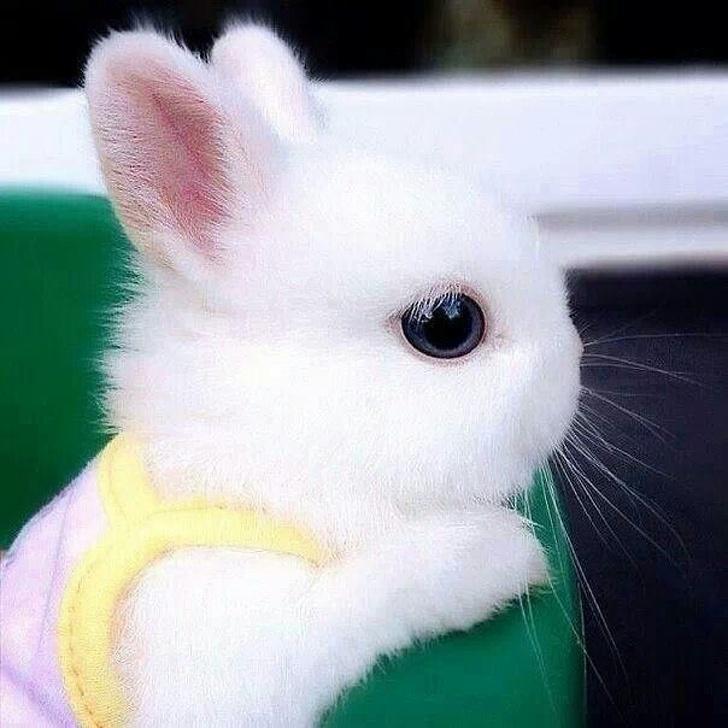 请问是绒毛娃娃吗? 33张「每一只都萌入人心」的迷你兔兔照片