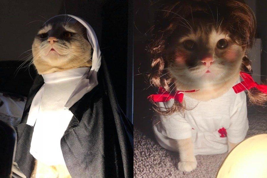 胖橘猫万圣节要穿「安娜贝尔装」 表情超有戏让网友笑:怕怕馁~