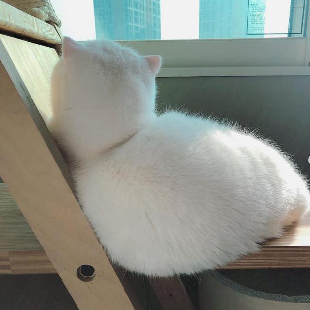 躺椅太苏胡!胖萌猫躺窗边「秒变一颗大麻糬」 主人被疗癒:不能只有我看到
