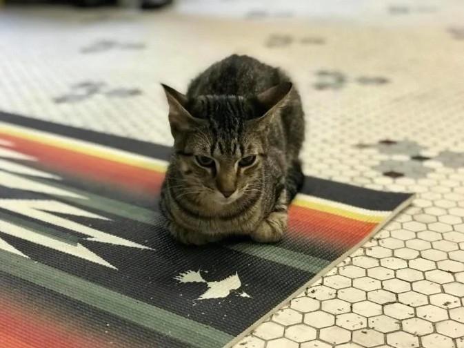 退休老爷爷把收容所猫咪当家人 每天抽3小时「陪午睡」感动喵星人